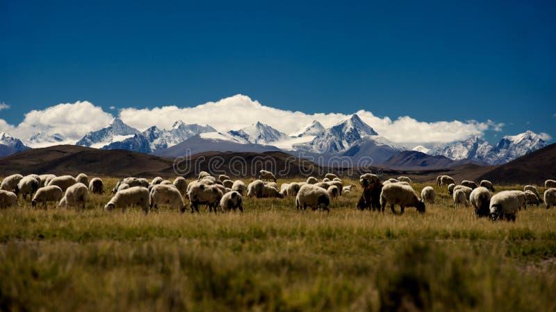 Βουνά και λίμνη στο οροπέδιο qinghai-Θιβέτ στοκ εικόνα
