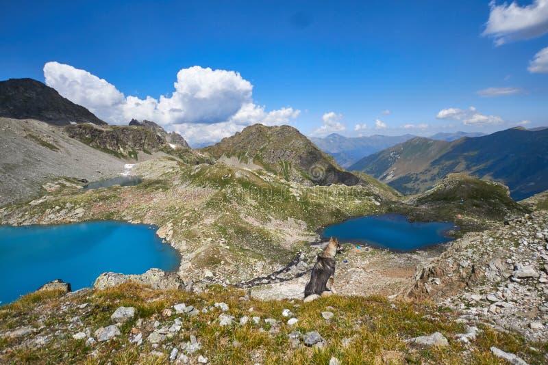 Βουνά Καύκασου λιμνών το καλοκαίρι, η τήξη της λίμνης Arkhyz Sofia κορυφογραμμών παγετώνων Όμορφα υψηλά βουνά της Ρωσίας, σαφής π στοκ εικόνα με δικαίωμα ελεύθερης χρήσης