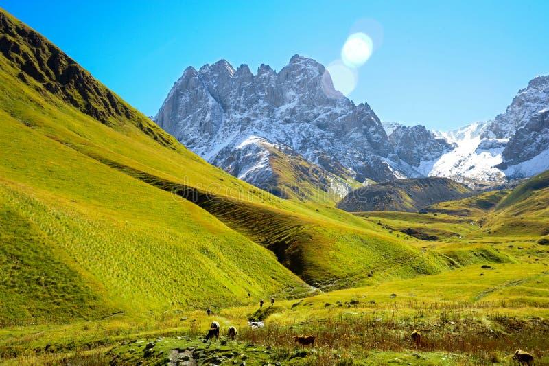 Βουνά Καύκασου το καλοκαίρι, τους πράσινους λόφους, το μπλε ουρανό και χιονώδες μέγιστο Mkinvari δρόμος από Gudauri σε Stepantsmi στοκ εικόνες με δικαίωμα ελεύθερης χρήσης