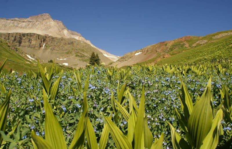 βουνά λιβαδιών δύσκολα στοκ φωτογραφία με δικαίωμα ελεύθερης χρήσης