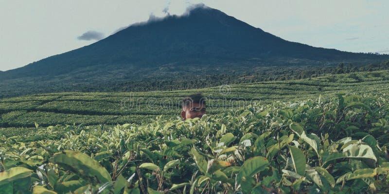 βουνά με τον κήπο τσαγιού στοκ εικόνες με δικαίωμα ελεύθερης χρήσης