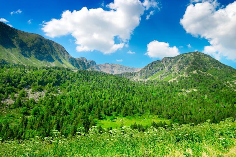 Βουνά που καλύπτονται με το δάσος στοκ εικόνες