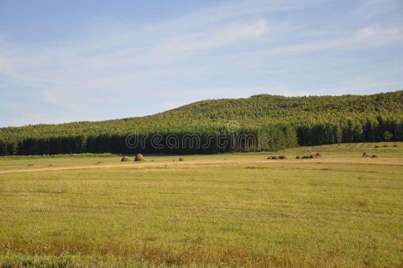 Βουνά Πράσινος τομέας με τις αποχρώσεις κίτρινου με τις θυμωνιές χόρτου και τα δέντρα μακριά Καλοκαίρι, Αύγουστος στοκ εικόνες με δικαίωμα ελεύθερης χρήσης