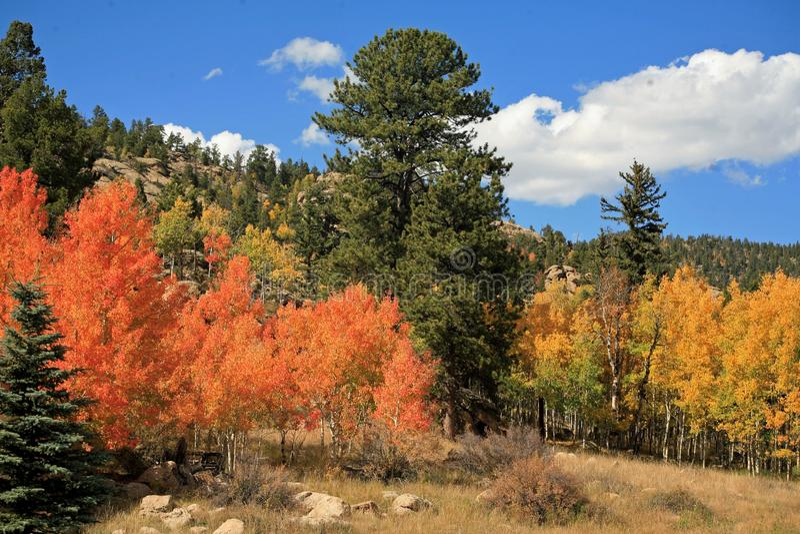 Βουνά του Κολοράντο με τα κόκκινα και χρυσά δέντρα Aspens στην αιχμή των χρωμάτων πτώσης στοκ φωτογραφίες με δικαίωμα ελεύθερης χρήσης