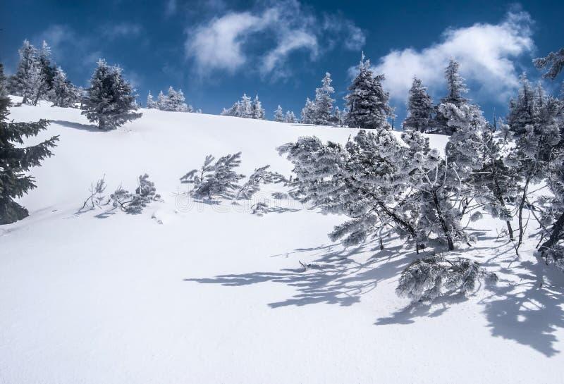Βουνά χειμερινού Jeseniky στην Τσεχία με το χιόνι, το μικρό βόστρυχο και το μπλε ουρανό με τα σύννεφα στοκ φωτογραφία με δικαίωμα ελεύθερης χρήσης
