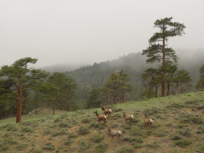 βουνά deers στοκ εικόνα με δικαίωμα ελεύθερης χρήσης