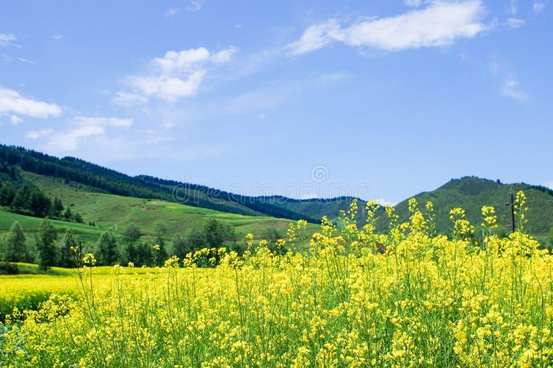 Βουνά Qilian στοκ φωτογραφίες