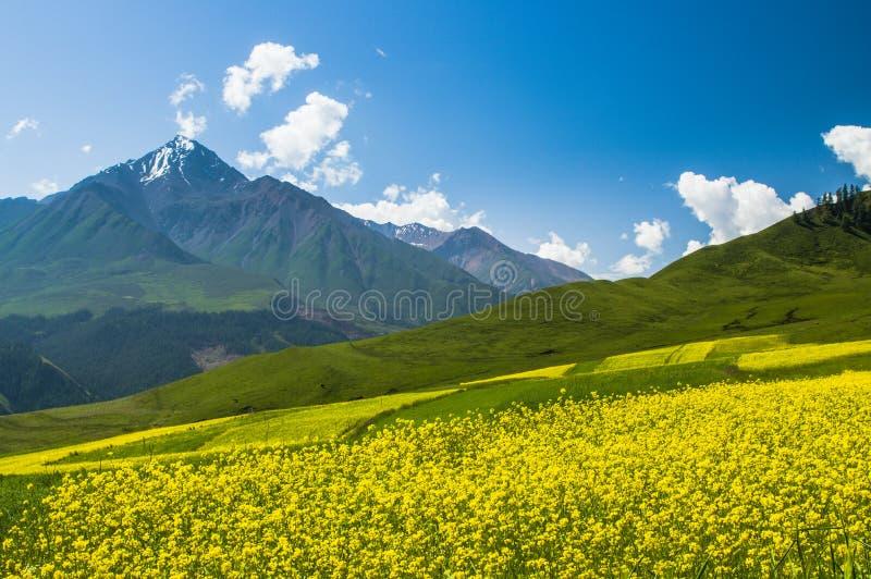 Βουνά Qilian στοκ εικόνες