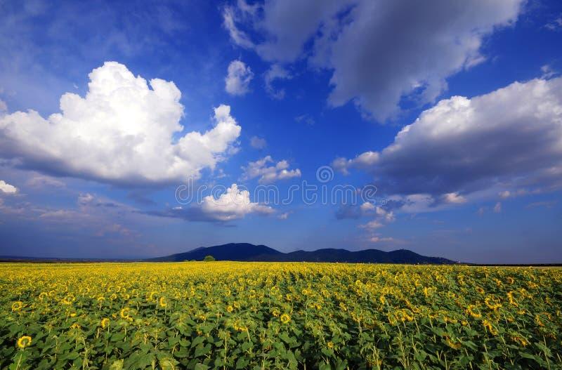 Βουνά Vrsac στοκ εικόνες με δικαίωμα ελεύθερης χρήσης