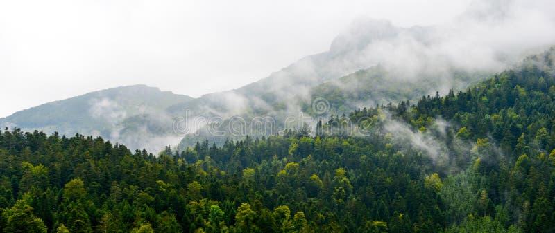 Βουνό-δάσος στα cloudscape-Πυρηναία Γαλλία στοκ φωτογραφία με δικαίωμα ελεύθερης χρήσης