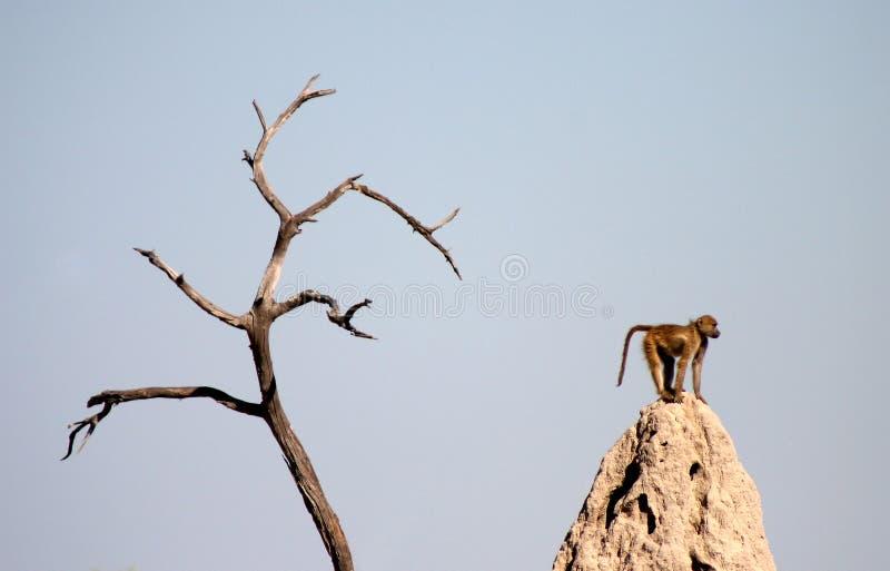 βουνό βασιλιάδων στοκ φωτογραφία με δικαίωμα ελεύθερης χρήσης
