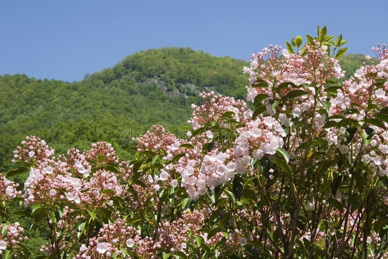 βουνό δαφνών στοκ εικόνα με δικαίωμα ελεύθερης χρήσης