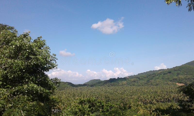 Βουνό καρύδων στοκ εικόνα με δικαίωμα ελεύθερης χρήσης