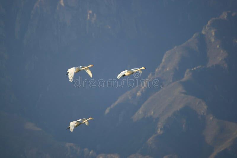 Download βουνό οικογενειακών μυ& στοκ εικόνες. εικόνα από και - 13188066