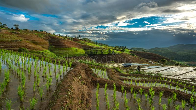 Βουνό τοπίων τομέων ορυζώνα ρυζιού στοκ φωτογραφία