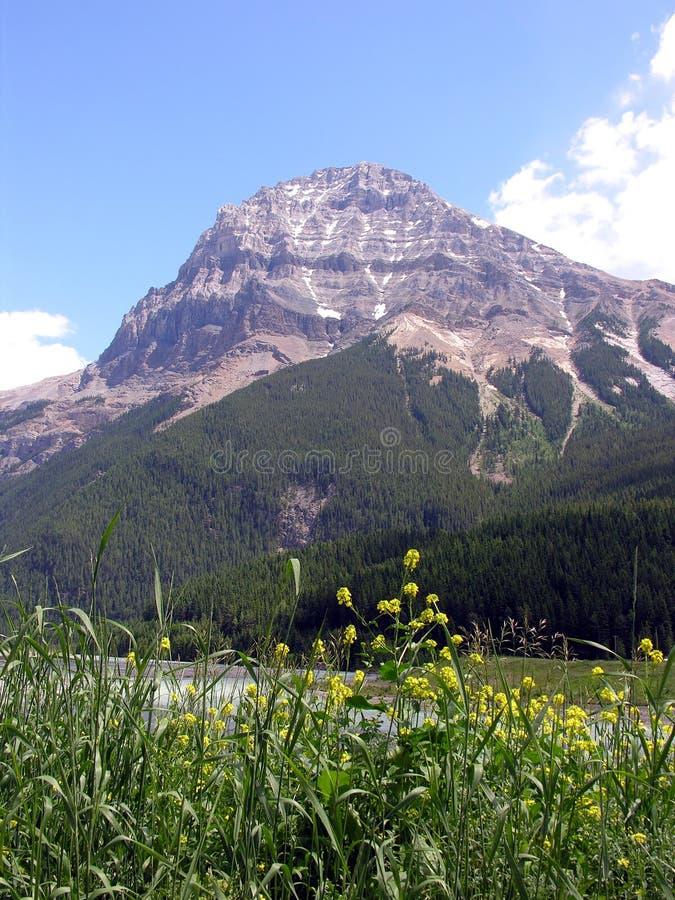 Download βουνό στοκ εικόνες. εικόνα από γαλήνιος, δέντρα, rockies - 1532876