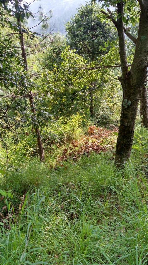Βουνό apple& x27 απόψεις τοπίων του s στοκ φωτογραφία με δικαίωμα ελεύθερης χρήσης