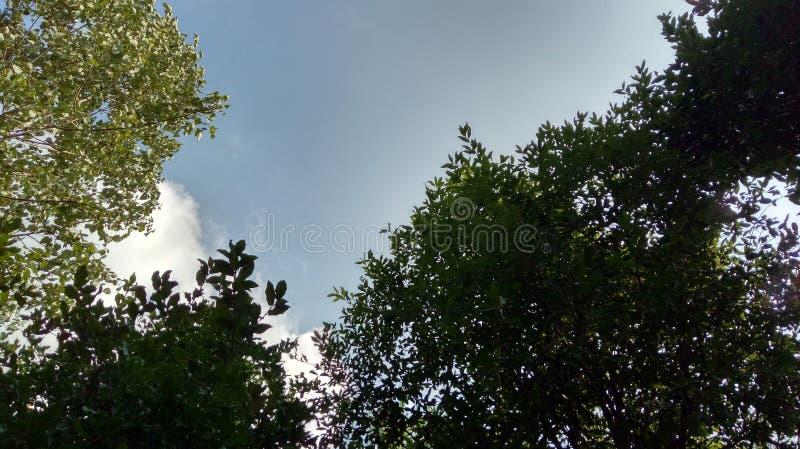 Βουνό apple& x27 απόψεις τοπίων του s στοκ εικόνες