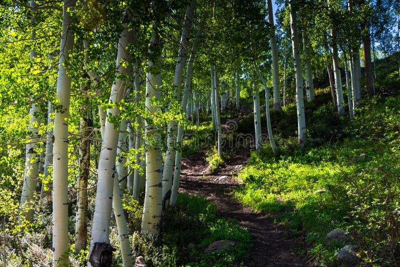 Βουνό Aspens στοκ φωτογραφία με δικαίωμα ελεύθερης χρήσης