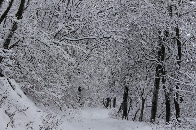 Βουνό Belasitsa χιονιού τον Ιανουάριο του 2019 πέρα από Petrich, Βουλγαρία στοκ φωτογραφίες