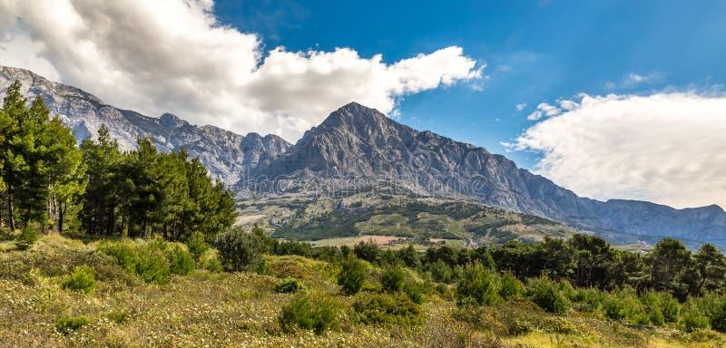 Βουνό Biokovo και δέντρο-Makarska, Κροατία στοκ εικόνα