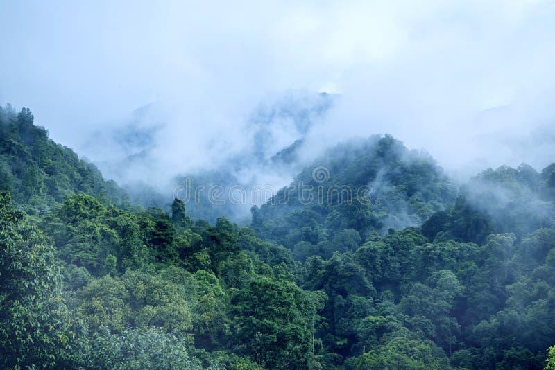 Βουνό Pangrango στο misty πρωί στοκ εικόνες