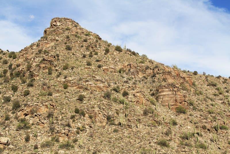 Βουνό Saguaro στο υποστήριγμα Lemmon στο Tucson Αριζόνα στοκ εικόνα