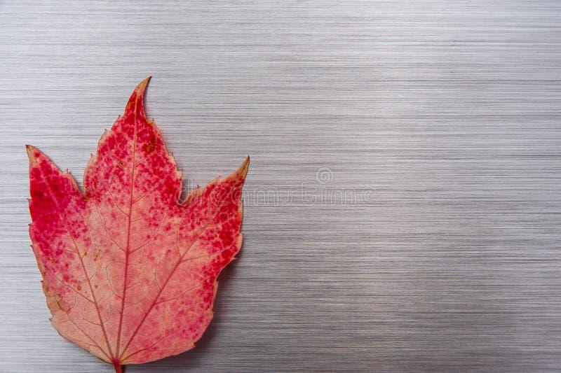 Βουρτσισμένο φύλλο φθινοπώρου μετάλλων στοκ φωτογραφία με δικαίωμα ελεύθερης χρήσης