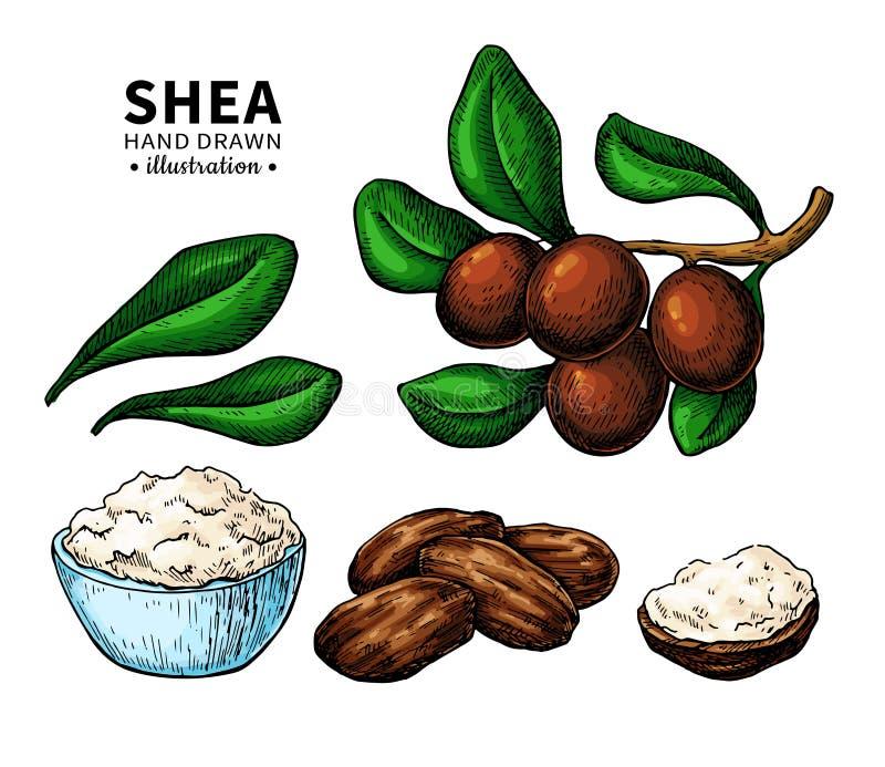 Βουτύρου διανυσματικό σχέδιο του Shea Απομονωμένη απεικόνιση του μούρου, καρύδια, κλάδος διανυσματική απεικόνιση