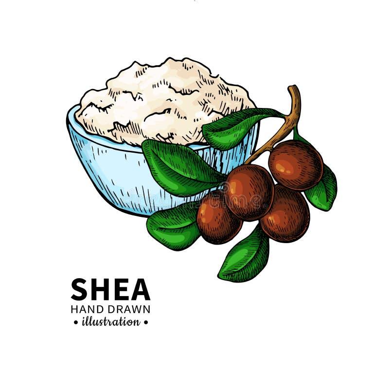 Βουτύρου διανυσματικό σχέδιο του Shea Απομονωμένη απεικόνιση των καρυδιών, βούτυρο απεικόνιση αποθεμάτων