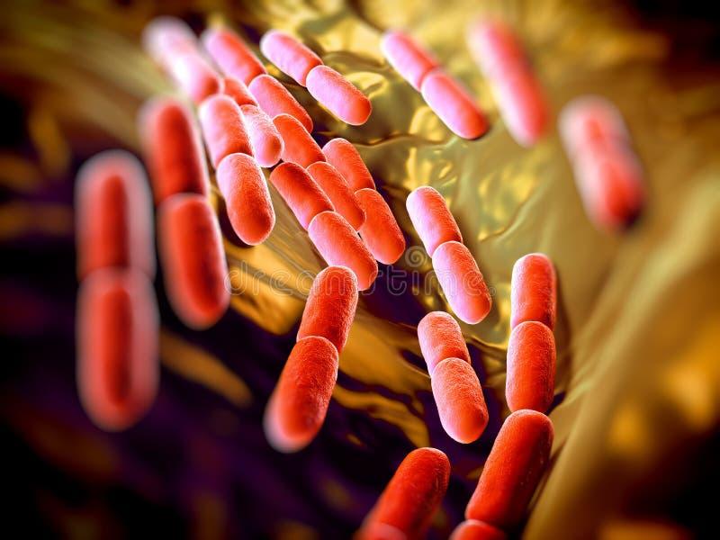 Βουλγαρικά βακτηρίδια γαλακτοβακίλλων διανυσματική απεικόνιση