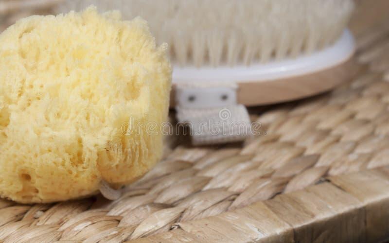 Βούρτσα λουτρών σφουγγαριών θάλασσας στοκ φωτογραφία με δικαίωμα ελεύθερης χρήσης