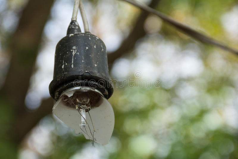 Βολβοί αλόγονου στοκ φωτογραφία με δικαίωμα ελεύθερης χρήσης