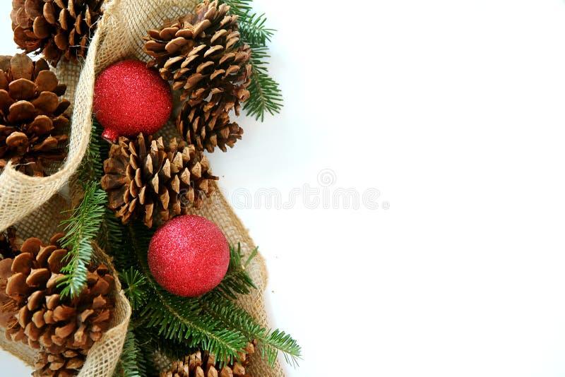 Βολβός Χριστουγέννων, Pinecone και αειθαλή σύνορα που απομονώνονται στο λευκό στοκ φωτογραφία με δικαίωμα ελεύθερης χρήσης