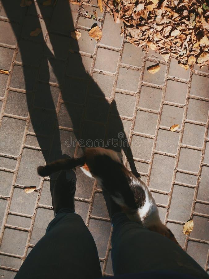 Βράδυ φθινοπώρου και μια γάτα στοκ εικόνα με δικαίωμα ελεύθερης χρήσης