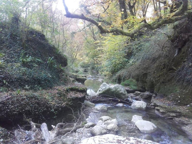 Βράχοι, ποταμός και βλάστηση στοκ εικόνα με δικαίωμα ελεύθερης χρήσης