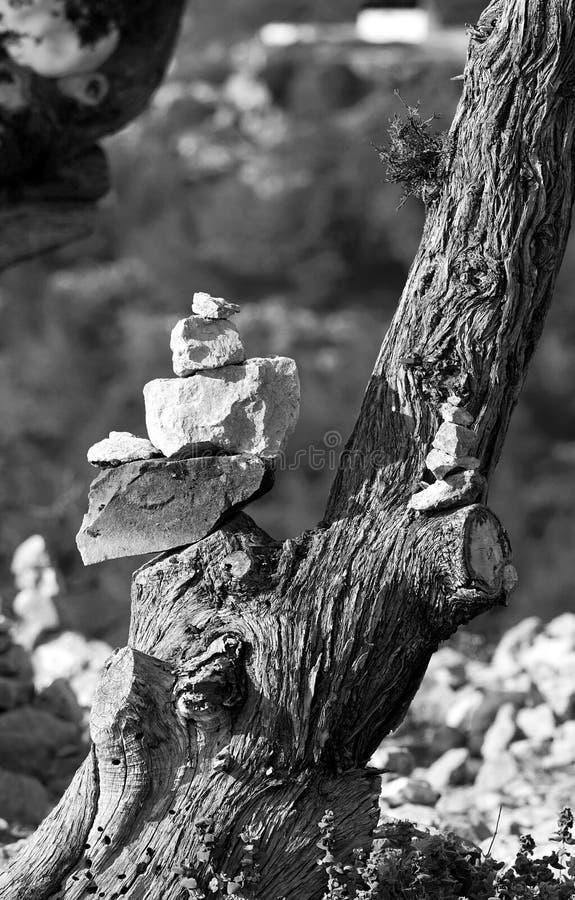 Βράχοι της Zen στο δέντρο στοκ εικόνα με δικαίωμα ελεύθερης χρήσης