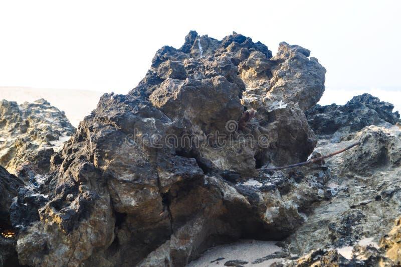 Βράχος ή παραλία Stone που απομονώνεται στο άσπρο υπόβαθρο στοκ φωτογραφία με δικαίωμα ελεύθερης χρήσης
