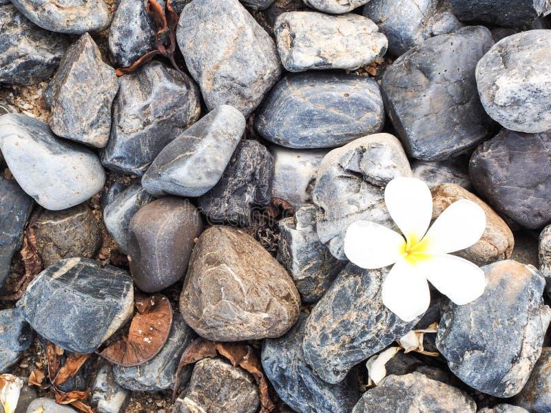 Βράχος και λουλούδι στοκ εικόνα με δικαίωμα ελεύθερης χρήσης