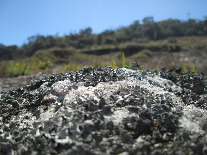 Βράχος με τις εγκαταστάσεις στοκ εικόνες