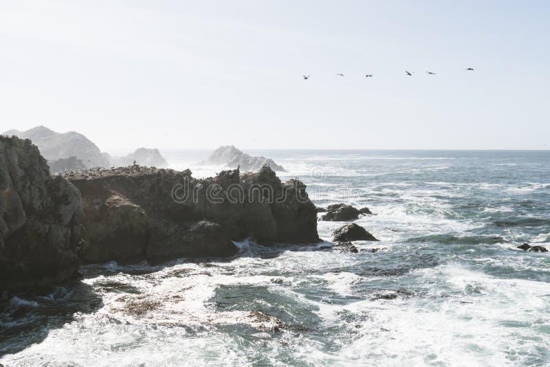 Βράχος πουλιών στο πάρκο κρατικής επιφύλαξης Lobos σημείου σε Monterey Καλιφόρνια μια ηλιόλουστη, όμως μουντή ημέρα Πουλιά όπως ο στοκ φωτογραφίες με δικαίωμα ελεύθερης χρήσης