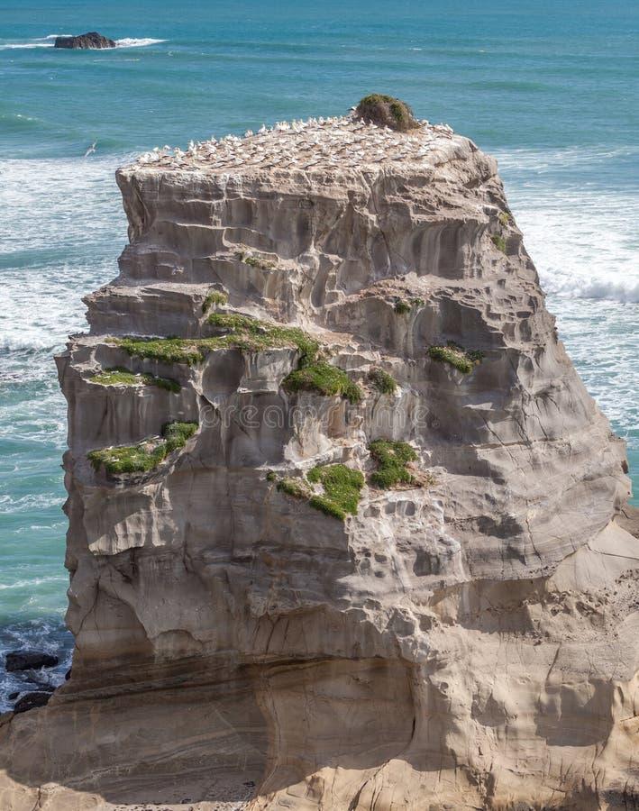 Βράχος στην παραλία Muriwai στοκ φωτογραφίες με δικαίωμα ελεύθερης χρήσης