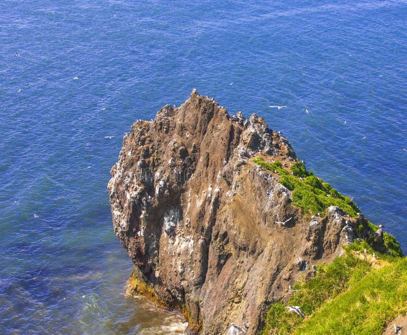 Βράχος στον ωκεανό με τους γλάρους και τις φωλιές τους μια ηλιόλουστη ημέρα στοκ εικόνα με δικαίωμα ελεύθερης χρήσης