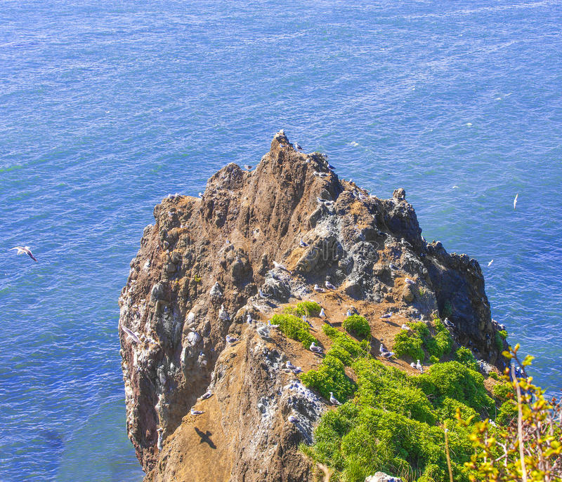 Βράχος στον ωκεανό με τους γλάρους και τις φωλιές τους μια ηλιόλουστη ημέρα στοκ εικόνες