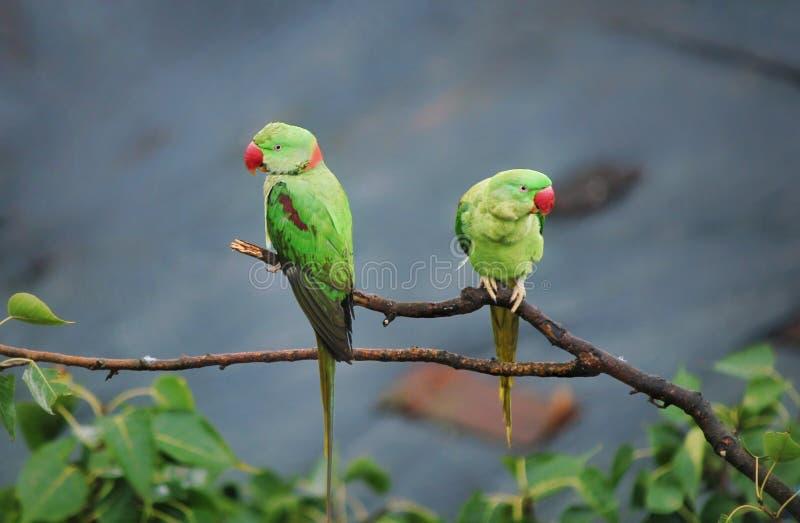 Βρήκε αυτό το χαριτωμένο ζευγάρι των πουλιών που κρεμούν επάνω σε ένα όμορφο πρωί στοκ φωτογραφία με δικαίωμα ελεύθερης χρήσης