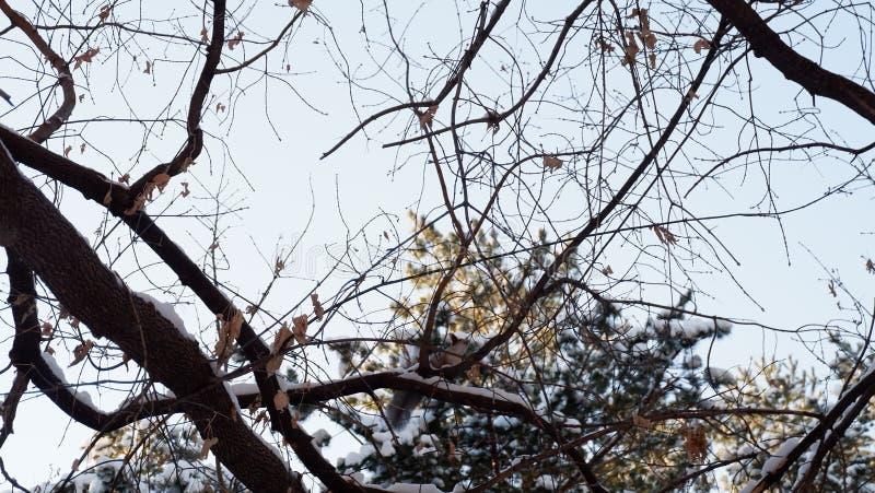 βρείτε το σκίουρο στοκ φωτογραφία