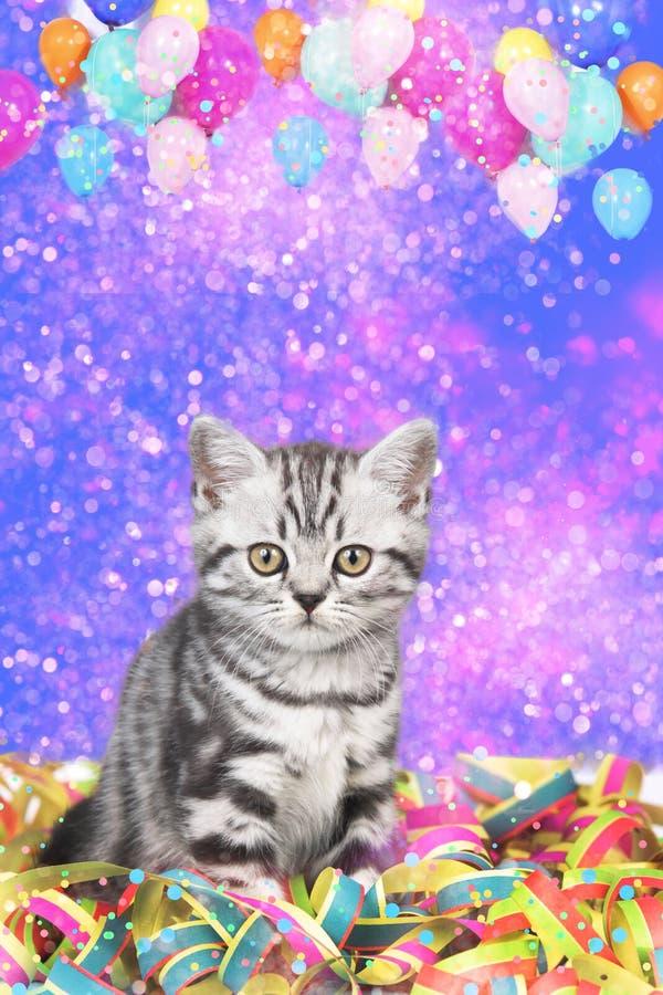 Βρετανική γάτα shorthair με τις ταινίες στοκ εικόνες με δικαίωμα ελεύθερης χρήσης