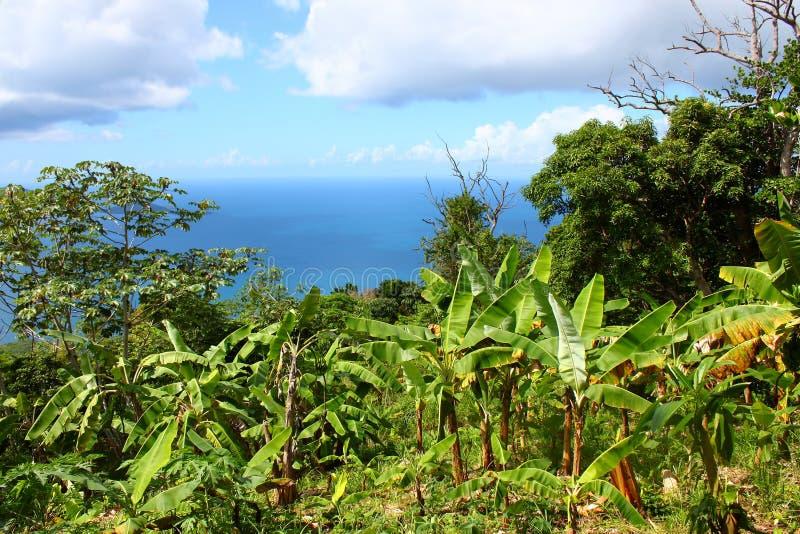 Βρετανικοί Παρθένοι Νήσοι Tortola στοκ εικόνες