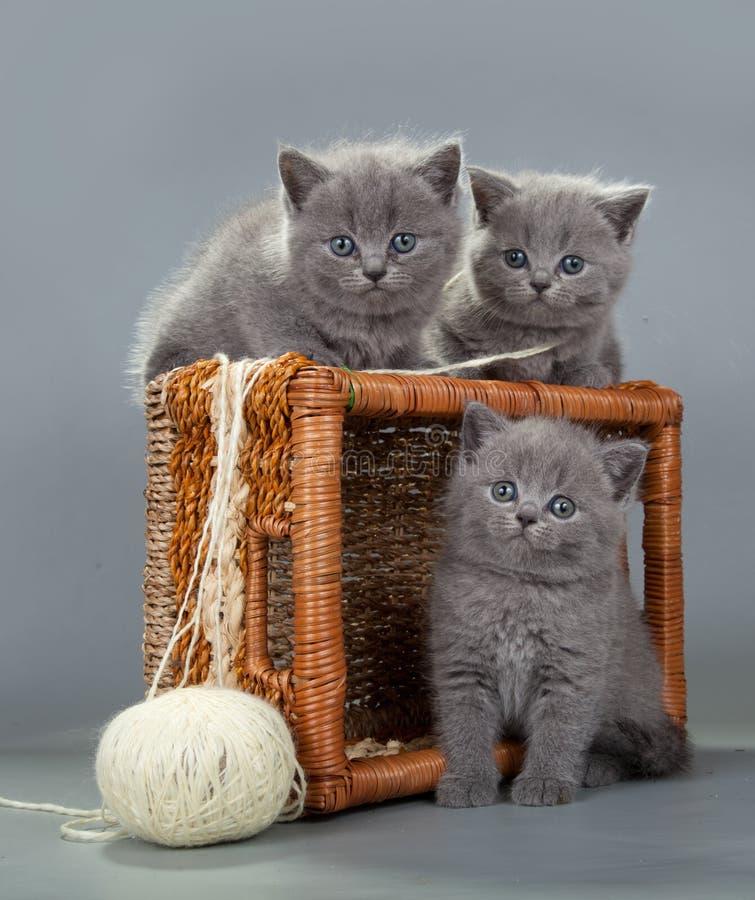 Βρετανικό γατάκι με μια σφαίρα του μαλλιού στο καλάθι στοκ εικόνες