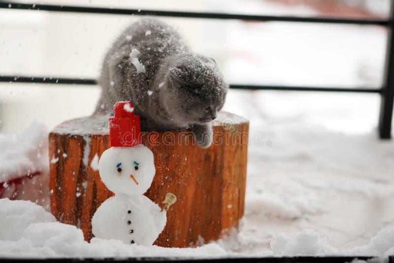Βρετανικό γατάκι Shorthair στοκ εικόνες με δικαίωμα ελεύθερης χρήσης